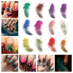 DIY Nail Art 12 Color Feather Series